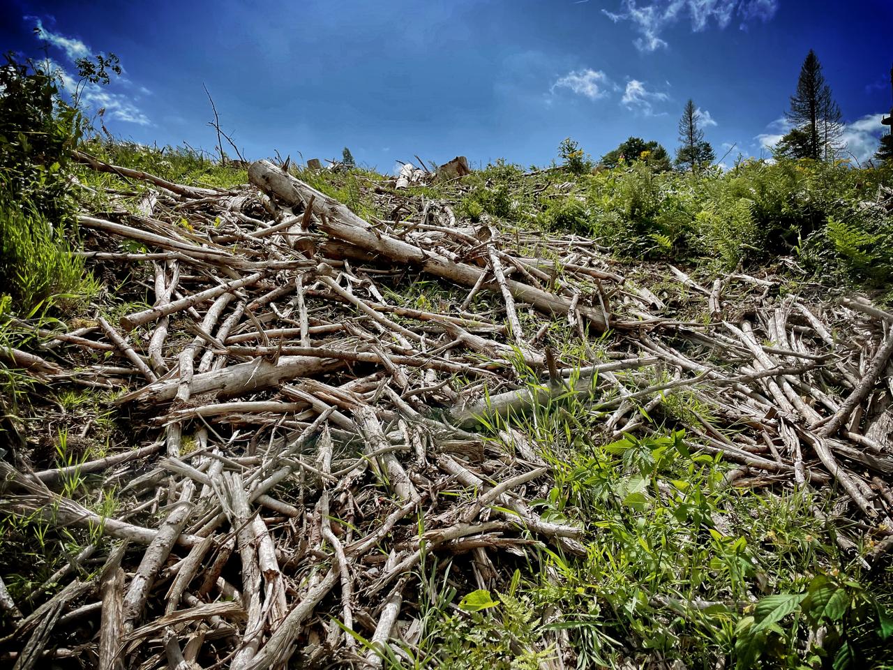 """infoleck: CW """"Waldsterben Klimakatastrophe"""" (sensitive)"""