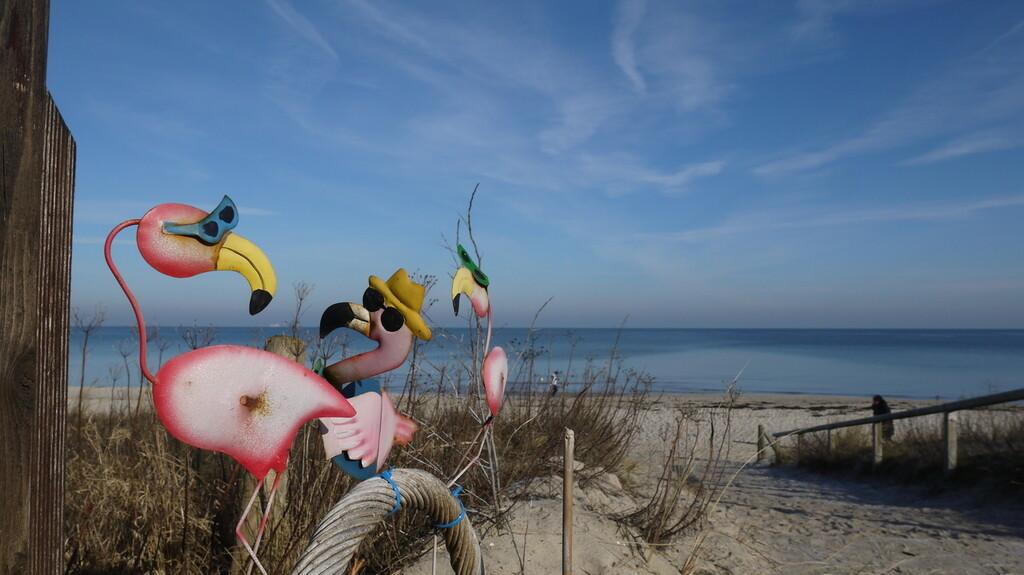 Ein Weg durch Sanddünen zum Strand. Im Vordergrund links bunt gestaltete Flamingos mit Sonnenbrillen. Im Hintergrund das Meer, blauer Himmel.